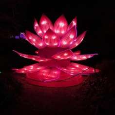 Lit lotus flower