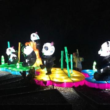 Lantern Pandas