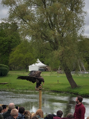 The Falconer's Quest Warwick Castle