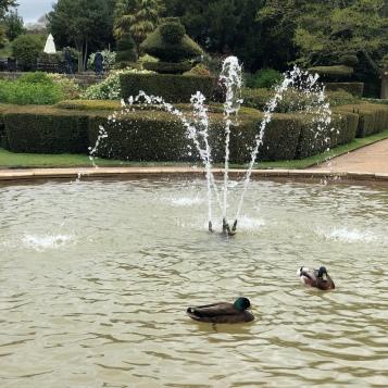 Peacock Garden at Warwick Castle