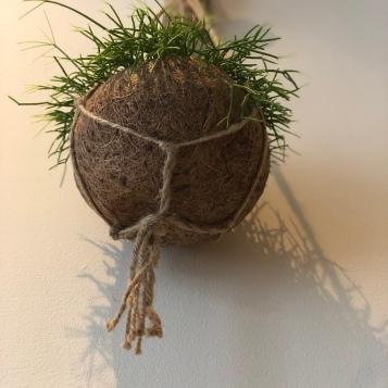 Coconut plant hangers